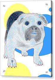 Charlie The Bulldog Acrylic Print by Tess M J Iroldi