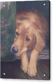 Charlie's In The Doghouse Acrylic Print by Diane Caudle