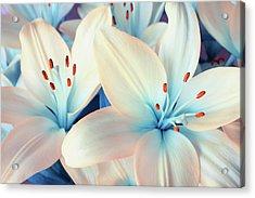 Charming Elegance Acrylic Print