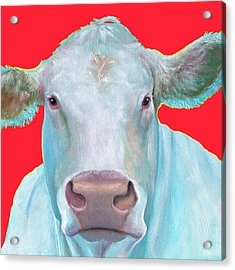 Charolais Cow Painting On Red Background Acrylic Print