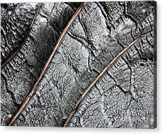 Charred Pine Bark Acrylic Print
