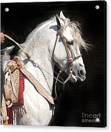 Charro Stallion Acrylic Print by Jim And Emily Bush