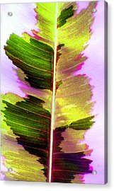 Chartreuse Acrylic Print by Carolyn Stagger Cokley