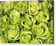 Chartreuse Colored Roses Acrylic Print