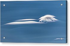 Chasing Lenticulars - Acrylic Print