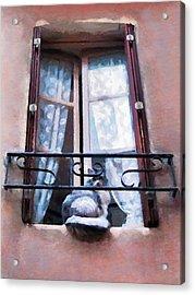 Chat Bleu Dans La Fenetre Rose Acrylic Print