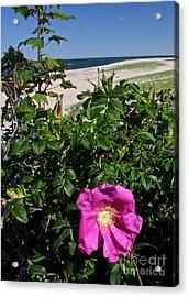 Chatham Flower Acrylic Print