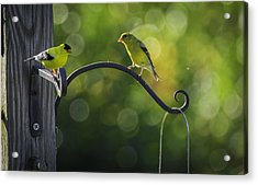 The Conversation Acrylic Print