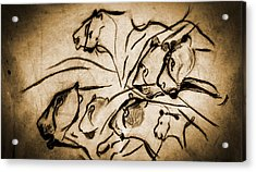 Chauvet Cave Lions Burned Leather Acrylic Print