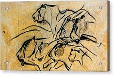 chauvet cave lions Clear Acrylic Print