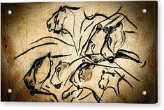 Chauvet Cave Lions Acrylic Print