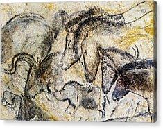 Chauvet Horses Aurochs And Rhinoceros Acrylic Print