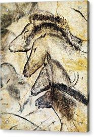 Chauvet Horses Acrylic Print