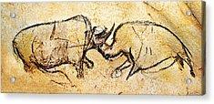 Chauvet Rhinoceros In Combat Acrylic Print