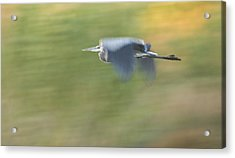 Check Me Out Acrylic Print by Charlie Osborn