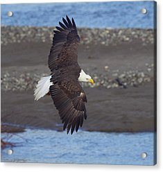 Acrylic Print featuring the photograph Checking Out The River by Elvira Butler