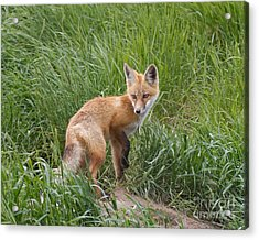 Checking The Perimeter Acrylic Print by Royce Howland