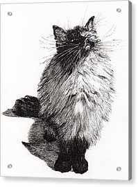 Cheekie Baby Acrylic Print by Vincent Alexander Booth