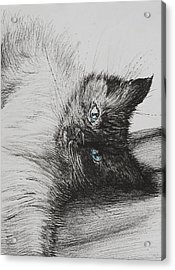 Cheeky Baby Acrylic Print by Vincent Alexander Booth