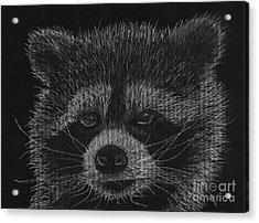 Cheeky Little Guy - Racoon Pastel Drawing Acrylic Print