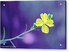 Cheer Up Buttercup Acrylic Print