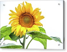 Acrylic Print featuring the photograph Cheerful Flower Cheerful Mood by Jenny Rainbow