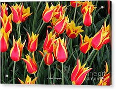 Cheerful Spring Tulips Acrylic Print