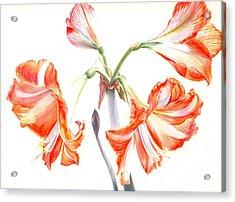 Cheery Amaryllis  Acrylic Print