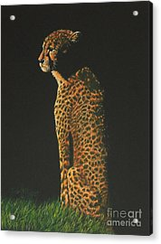 Cheetah At Sunset Acrylic Print