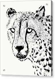 Cheetah Close-up Acrylic Print