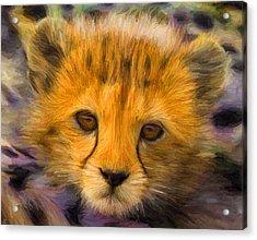 Cheetah Cub Acrylic Print by Caito Junqueira
