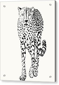 Cheetah Full Figure, Front-on View Acrylic Print