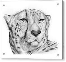 Cheetah Acrylic Print by Greg Joens
