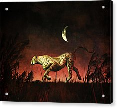 Cheetah Hunting During The African Night Acrylic Print