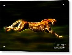 Cheetah Hunting His Prey Acrylic Print by Pamela Johnson