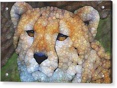 Cheetah Acrylic Print by Jack Zulli