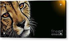 Cheetah Acrylic Print by Jurek Zamoyski