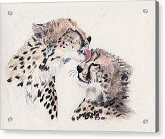 Cheetah Love Acrylic Print by Marqueta Graham