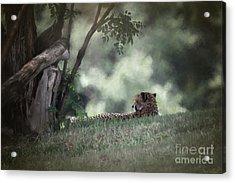 Cheetah On Watch Acrylic Print