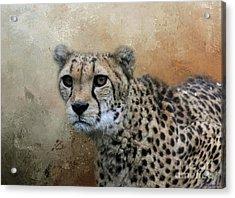 Cheetah Portrait Acrylic Print by Eva Lechner
