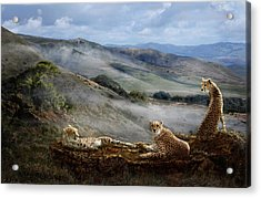 Cheetah Ridge Acrylic Print