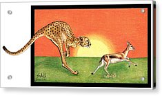 Cheetahroo On The Hunt Acrylic Print