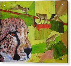 Cheetahs At Play Acrylic Print