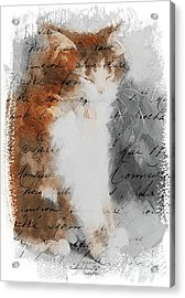 Cher Chat ... Acrylic Print
