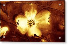Cherokee Rose Dogwood - Single Glow Acrylic Print