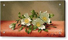 Cherokee Roses Acrylic Print by Martin Johnson Heade