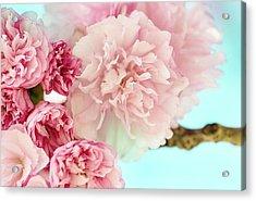 Kwanzan Cherry Acrylic Print