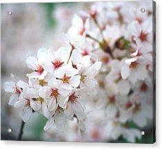 Cherry Blossom Close-up No. 6 Acrylic Print by Karen Garvin