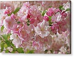 Acrylic Print featuring the photograph Cherry Blossom Closeup by Gill Billington