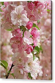 Acrylic Print featuring the photograph Cherry Blossom Closeup Vertical by Gill Billington